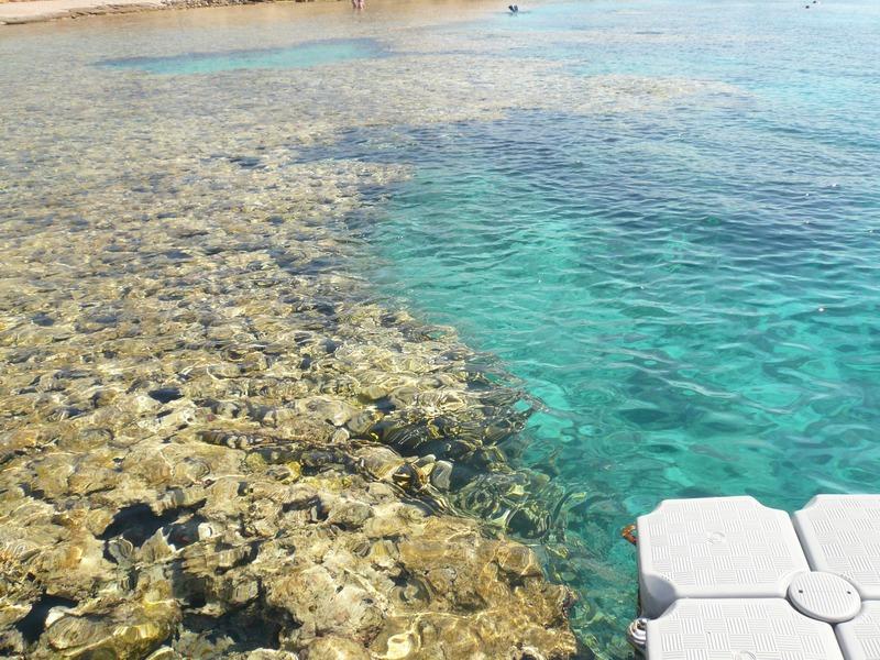 Пляж Sharks Bay