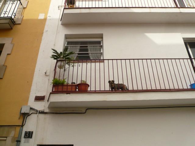 Собачка на балконе