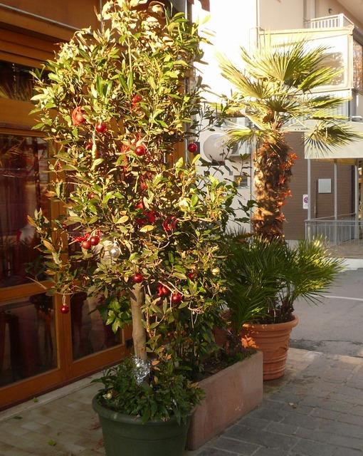 В Италии украшают не только елки