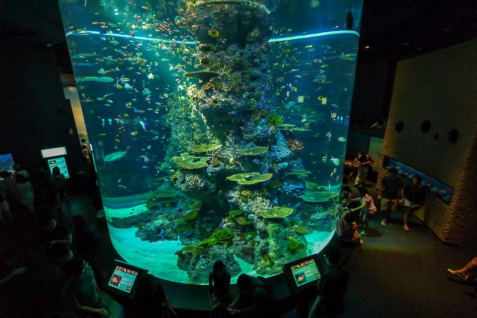 Океанариум в сингапуре