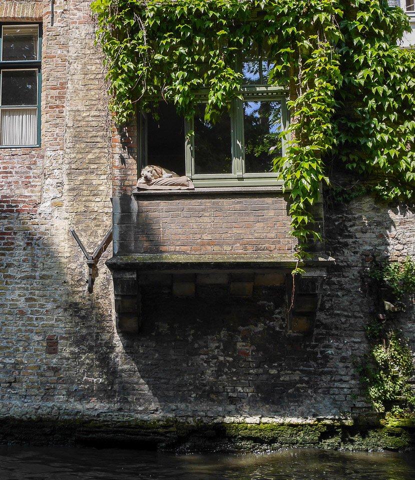 Собачка в Брюгге. Мой кадр