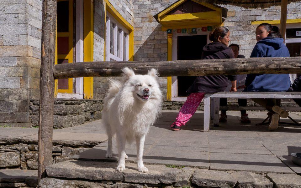 Улыбающаяся собачка