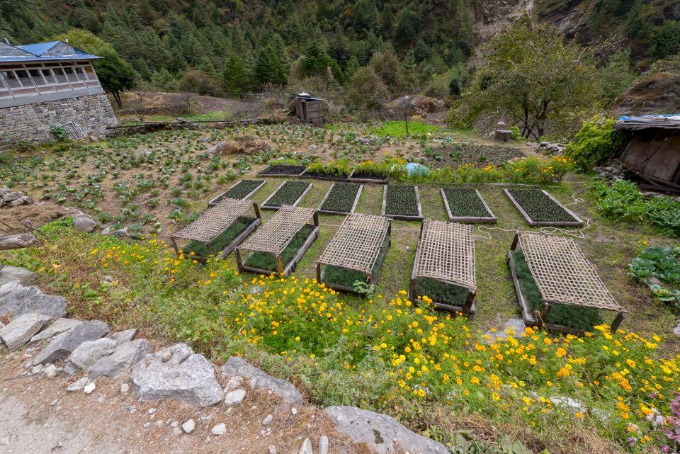 Овощи и зелень выращивают в накрытых грядках