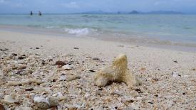 Коралл  на берегу